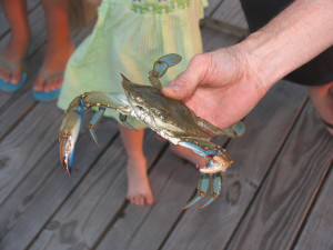 Pawleys-Island_May-2011_8-300x225